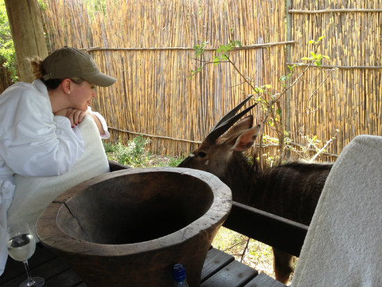 A Nyala comes to visit our private terrace at Royal Malewane
