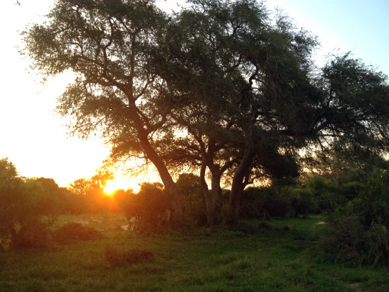 Sundown at Royal Malewane game reserve