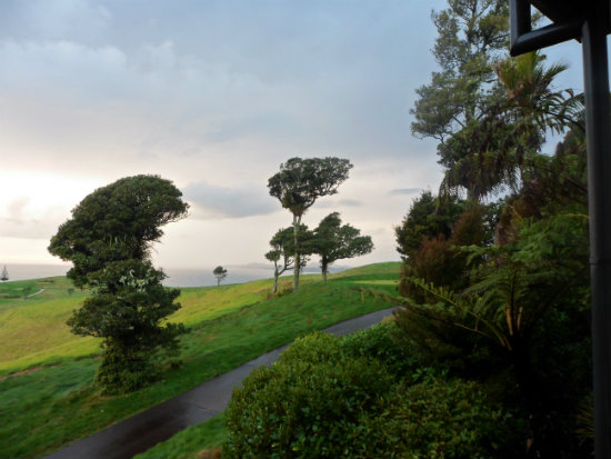 morning on my balcony at Kauri Cliffs